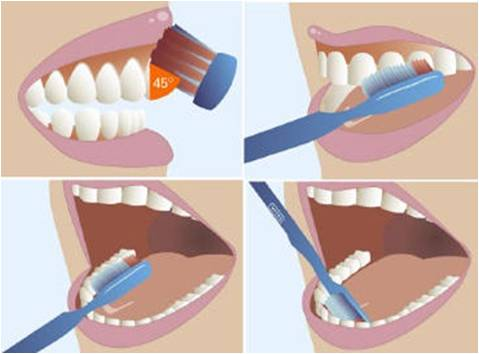 Image result for Chải răng đúng cách