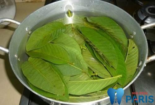 4 Cách chữa hôi miệng bằng lá ổi Tại Nhà Hiệu Quả TẬN GỐC 3