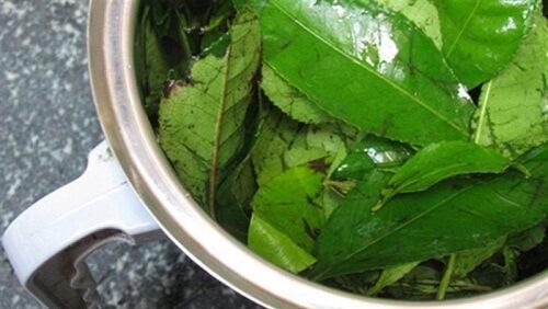 5 phút mỗi ngày với cách chữa hôi miệng bằng trà xanh 3